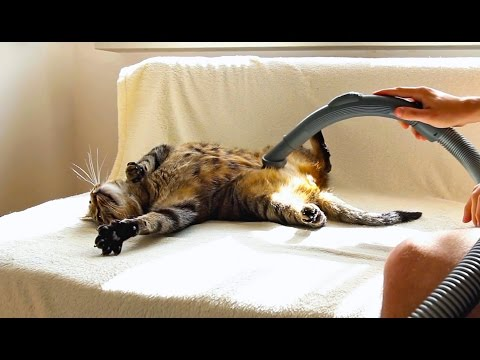 Cat Really Loves Being Vacuumed