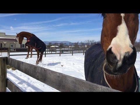 Horses Having Fun in the Snow