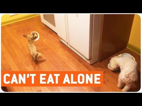 Dog Hates to Eat Alone