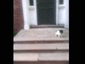 (VIDEO) Puppy Afraid Of Stairs Finds A Better Way