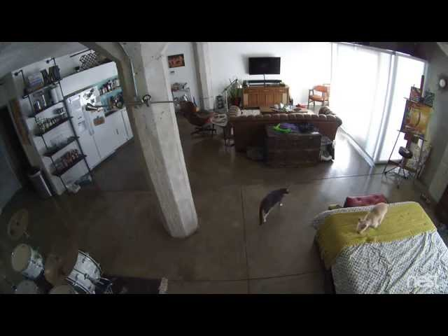 Cat Shuts Up Dog Video