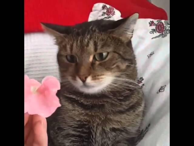 Cat's Reaction to a Flower is Hilarious