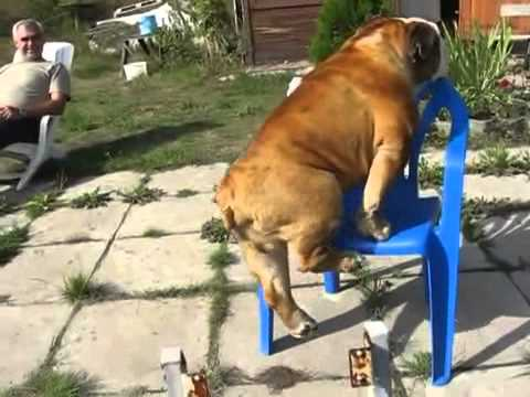(VIDEO) Did That Dog Just Do A Pull-up?