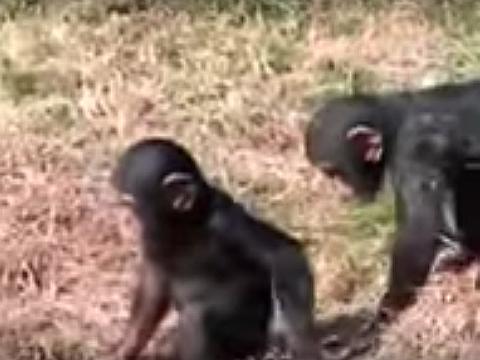 Rascal Monkey Did a Naughty Thing