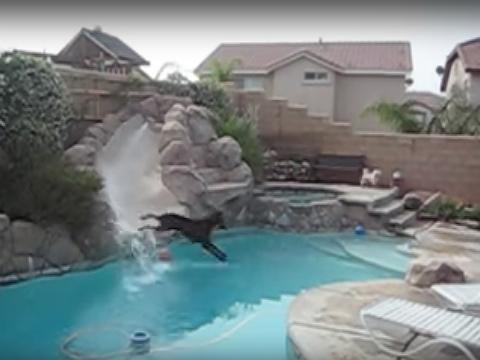 Funny Doberman Sliding video