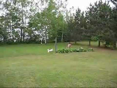 Deer And Dog Playing