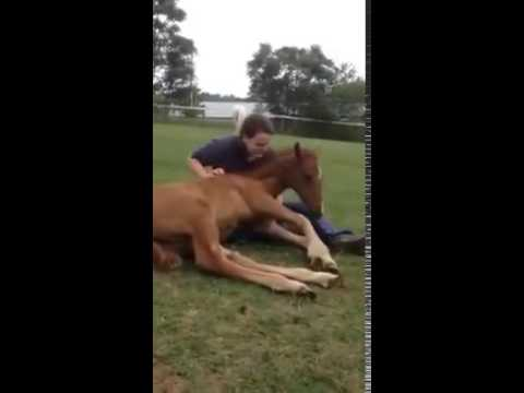 Baby Horse Thinks He's A Lap Dog