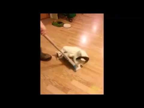 Man Sweeps Cat Off The Floor