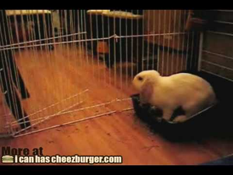 Bunny Wants His Bed Back