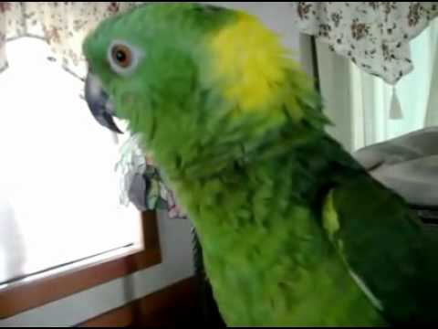 Amazing Bird Sings His Heart Out