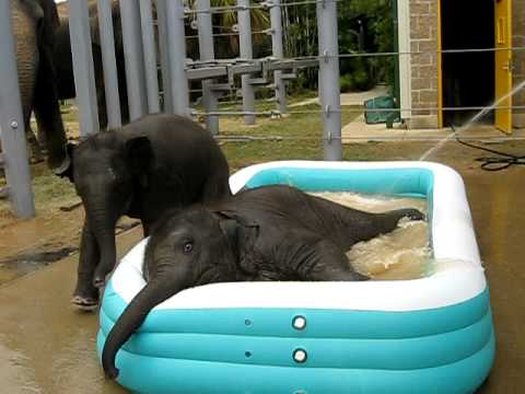 Two Baby Elephants in a Pool