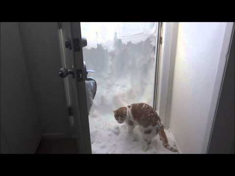 Rudiger the Cat Loves the Snow