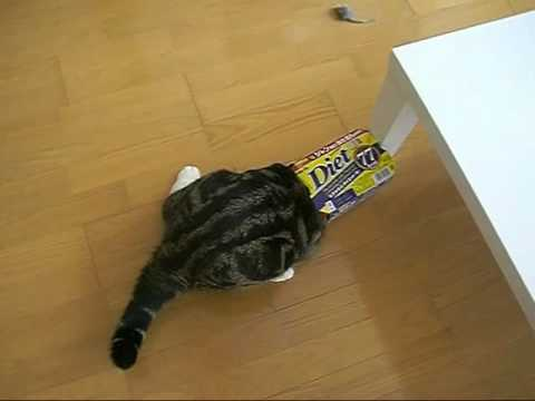 Cat Loves to Slide Into Boxes
