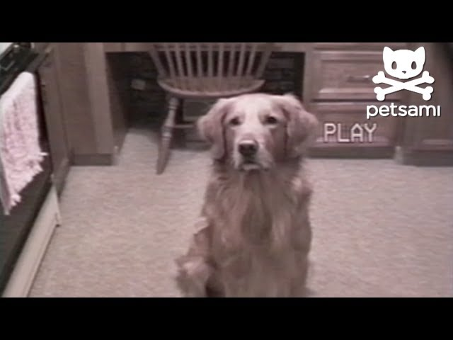 Dog Shows Off His Breakdancing Skills