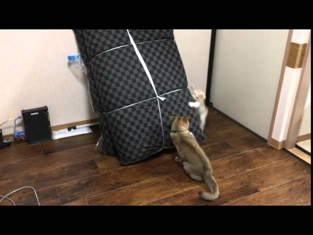 (VIDEO) Funny Cats Playing Tag