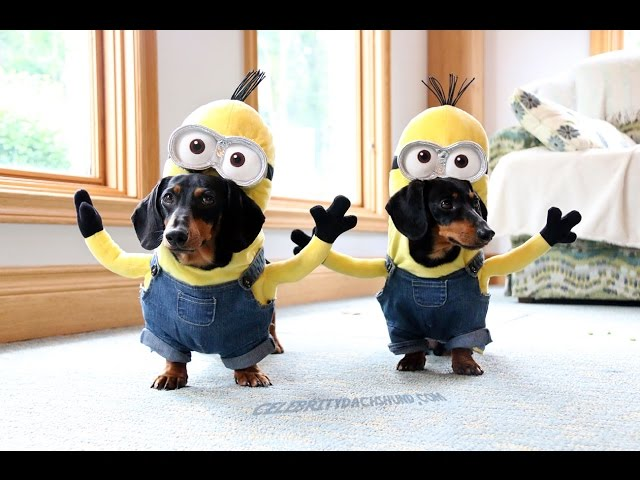 Funny Wiener Dog Minions
