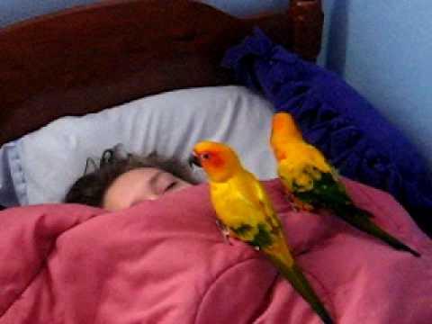 Cute Little Birds Waking Up Their Sister
