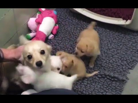 Mother Dog Elated After Reunited With Her Puppies Video