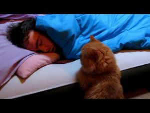 """(VIDEO) Funny Cat: """"Why Won't He Wake Up to Play With Me?"""""""