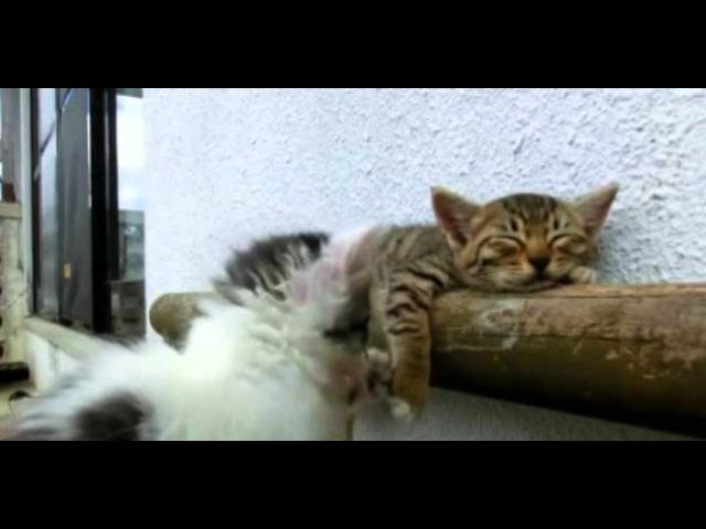 (VIDEO) Kitten Tries Waking Up His Friend