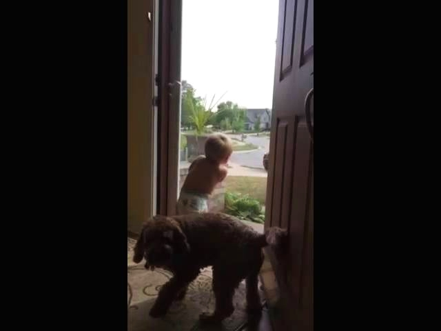 (VIDEO) Toddler and Dog Daddy's Home