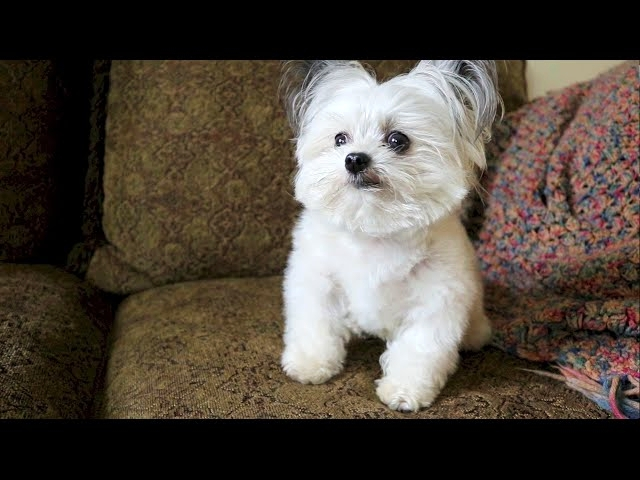 (VIDEO) When Norbert realizes he's getting a second treat.....priceless