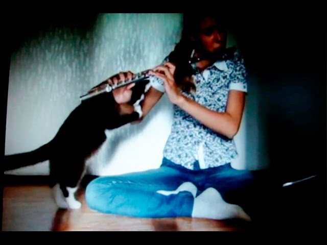 VIDEO: Cat Doesn't Like Hearing Her Play the Flute