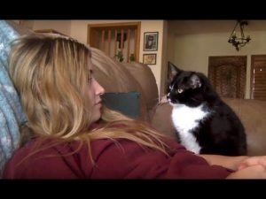World's Most Polite Cat Asks To Be Petted