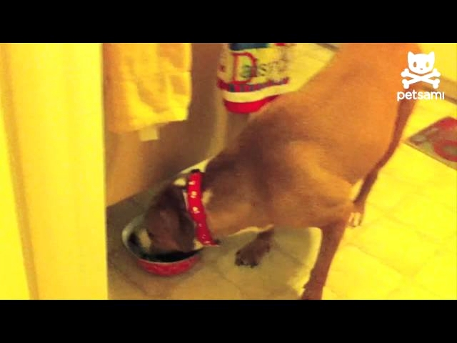 Video Cute Puppy Steals Food When Dog Isn't Looking